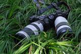 巅峰对决,EOS R5、A9 II谁才是真正的生态摄影利器?
