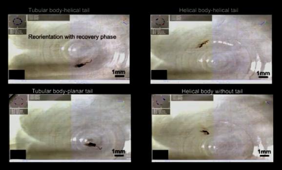 瑞士研究人员开发柔性纳米机器人 可在体内运送药物