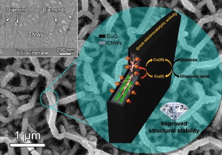 金屬所金剛石薄膜材料電化學傳感研究獲進展